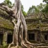 Sanctified Ta Prohm Temple At Angkor